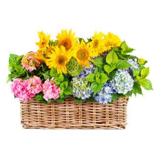 Цветы в корзинке «Загадка»